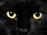 Il gatto vampiro e il principe