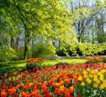 Mal di primavera, combatterla con i rimedi naturali