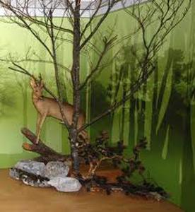 Inaugurazione Centro Visite del Parco Naturale delle Prealpi Giulie