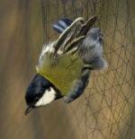 Antibracconaggio, cruente pratiche di uccellagione nel beneventano