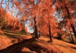 La suggestione dell'autunno ne I colori del bosco