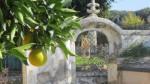 Rivalutare la città con l'Arte, Viteculture al Casale dei Cedrati a Villa Pamphilii di Roma