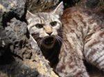 Quando gli animali domestici tornano in natura. Happy Hours al Museo Civico di Zoologia di Roma