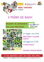 I fiori di Bach: storia, significato, applicazioni