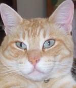 Il fascino del gatto e la sua storia