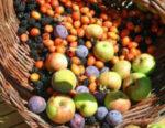 Mele e piccoli frutti alla mostra dell'agricoltura di montagna