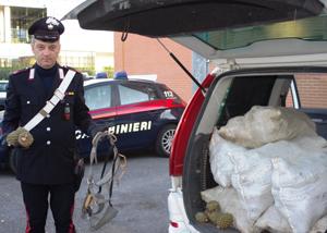In manette due marocchini che avevano rubato 159 chili di pigne