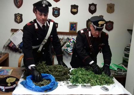 Coltivatori di marijuana finiscono in carcere