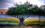 Colors la mostra del fotografo bolognese Paolo Gotti