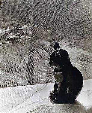 Il regno delle donne for Il gatto inverno