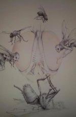 La possibile scomparsa degli insetti è più drammatica della distopia del romanzo I ditteri di Marco Visentin