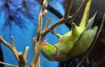 Diverso per natura …., al Museo di Zoologia di Roma