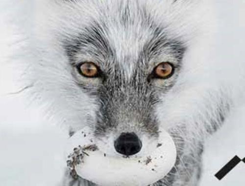 Wildlife Photographer of the Year – 53esima edizione