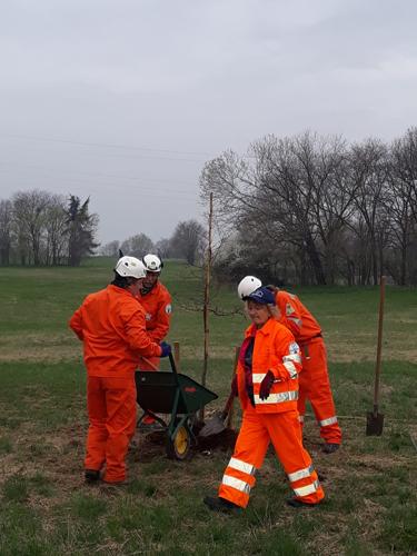 Gli Alpini piantano nuove querce al Parco di Rogoredo