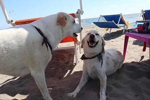 Per Pasqua riapre BAUBEACH® di Maccarese, la prima spiaggia per cani liberi e felici d'Italia
