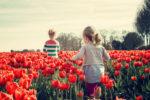 Tulipani delle Meraviglie by Steflor. Gli eventi dal 20 al 22 aprile a Paderno Dugnano