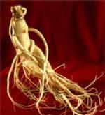 Ginseng, l'elisir di lunga vita