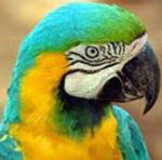Er pappagallo scappato