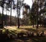 Leggende del Trentino nel bosco animato