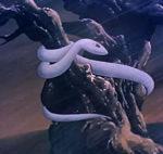 Il serpente bianco e la fortuna di un giovanotto