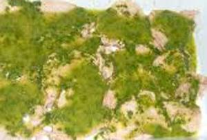 Bocconcini di pollo in salsa di ortiche e pachino