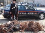 Cittadino romeno sorpreso mentre cercava di rubare 300 kg di oro rosso