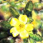 La Damiana, una pianta afrodisiaca e dalla mille proprieta'