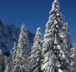Emergenza neve, il ministro Catania: oltre tremila forestali impegnati nelle operazioni di soccorso