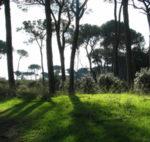 Sequestrata area protetta nel cuore della pineta di Castelfusano