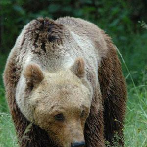The Bubu Day, un giorno con l'orso al Museo di Zoologia di Roma