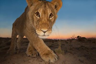 Wildlife photographer of the year. Gli scatti più belli della fotografia naturalistica del 2013 in mostra a Roma al Museo Civico di Zoologia