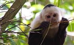 A tavola con le Scimmie, l'appuntamento al Museo Civico di Zoologia di Roma
