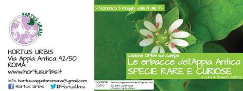 Erbacce del Parco dell'Appia Antica: Tre passi nella botanica