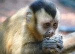 Nutrire il Pianeta &  Salvare la Biodiversità. Happy Hours 2014-15 al Museo Civico di Zoologia di Roma