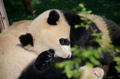 Indovina chi viene a Cina. Appuntamento al Museo Civico di Zoologia di Roma