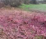 Fumo rosa ed esplosione in ex fabbrica di fuochi a Bojano