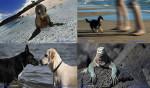 Al Baubeach®, la spiaggia per cani liberi e felici di Maccarese l'emozione della condivisione