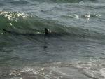Avvistato squalo a Ostia