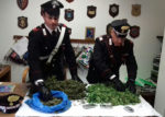 Coltivatori di marijuana finiscono in carcere