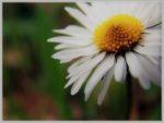 Cogli questo piccolo fiore