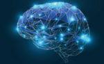 Cervello e mente umana, il futuro delle neuroscienze in Trentino