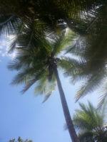 Costa Rica, uno dei paesi più felici al mondo
