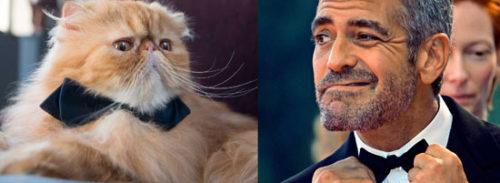 Miss Italia, il Gatto Yoda presentatore con la voce di Clooney