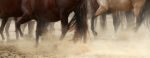Entre huellas y arenas. El Caballo de Peruano de Paso. Il cavallo espressione della cultura Peruviana