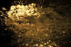 Invisible Light, la mostra di Sheila McKinnon alla Camera dei deputati di Roma
