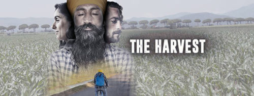 The Harvest al Cinema Multisala Corso di Latina