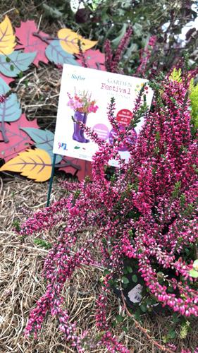Steflor a Paderno Dugnano III edizione del Garden Festival d'Autunno. Appuntamenti 13-14 ottobre
