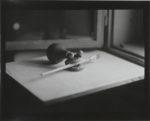 Goran Trbuljak. Before and After Retrospective, la mostra a Villa delle Rose di Bologna