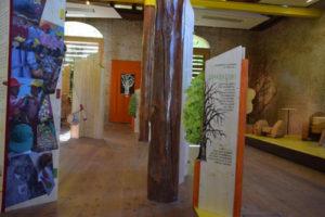 """Al Parco di Paneveggio in Trentino la mostra: """"Alberi: mestieri e passioni"""""""