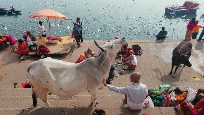 Festa India. Vent'anni in venti ore dappertutto